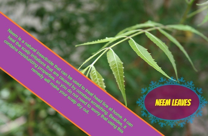how-to-get-rid-of-head-lice-neem-leaves