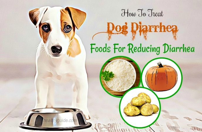 how to treat dog diarrhea
