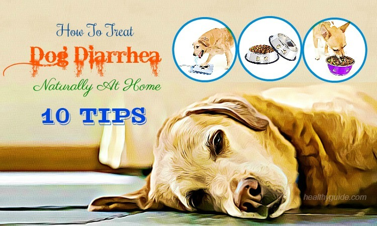 10 Tips How to Treat Dog Diarrhea & Vomiting with Blood Fast & Naturally