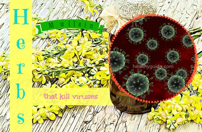 herbs that kill viruses