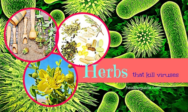 21 Best Natural Herbs that Kill Viruses and Clear Mucus from Lungs