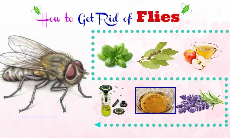 33 Tips How to Get Rid of Flies in Home, Bathroom, Kitchen ...
