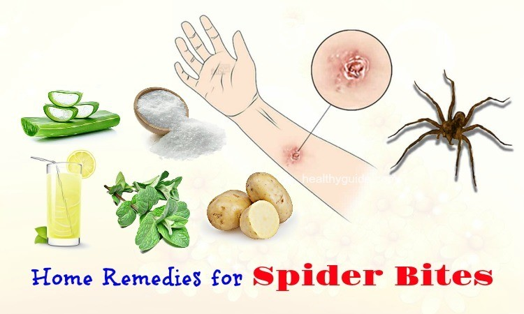 13 Natural Home Remedies for Spider Bites on Arms, Legs, Ankle, & Eyelid